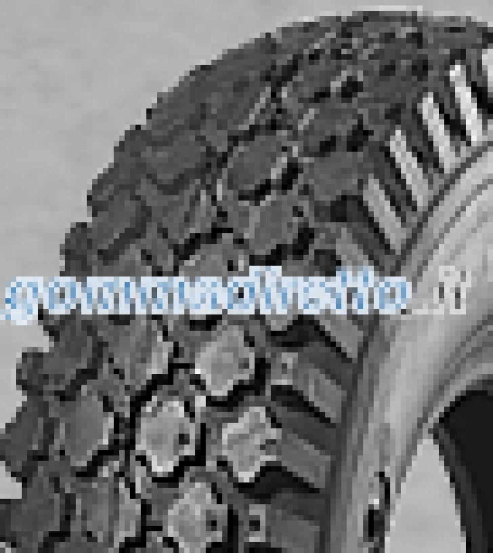 Image of Deli S-356 ( 4.10/3.50 -5 4PR TT SET - Reifen mit Schlauch )